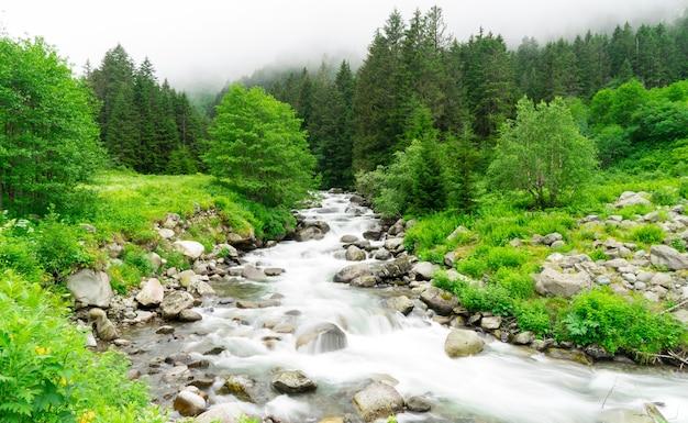 Pequena cachoeira na floresta, longa exposição. rize - turquia