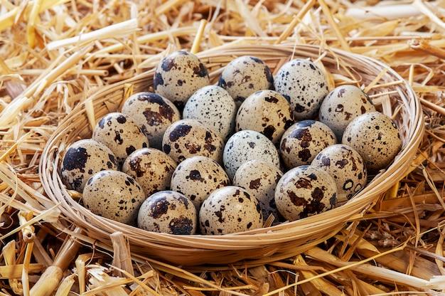 Pequena cesta de ovos de codorna