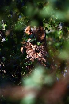 Pequena coruja olhando intensamente por entre os galhos das árvores