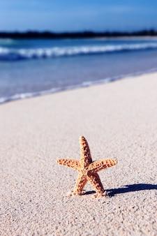 Pequena estrela do mar em uma praia do caribe