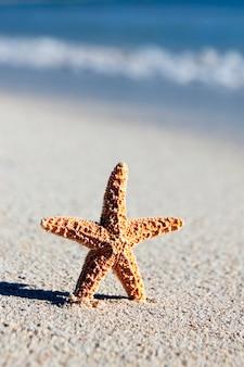 Pequena estrela do mar laranja em uma praia do caribe