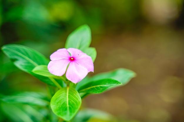 Pequena flor no galho de árvore
