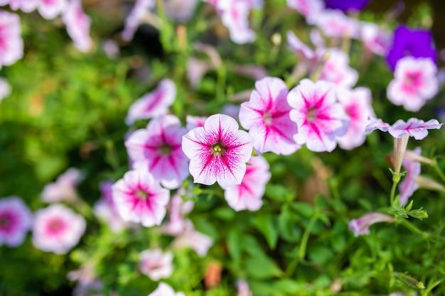 Pequena flor rosa natural