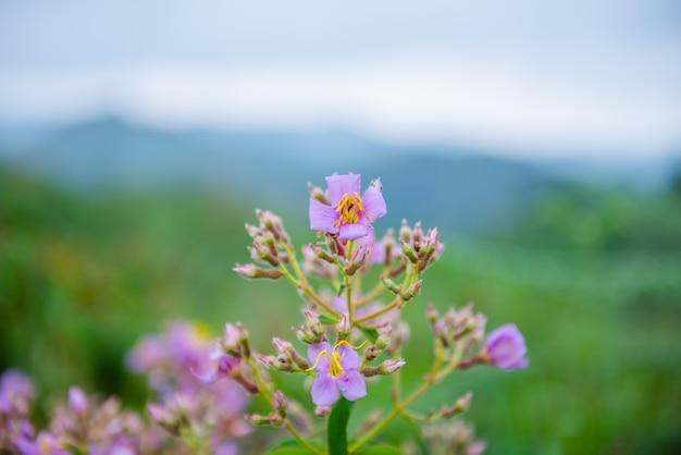 Pequena flor roxa