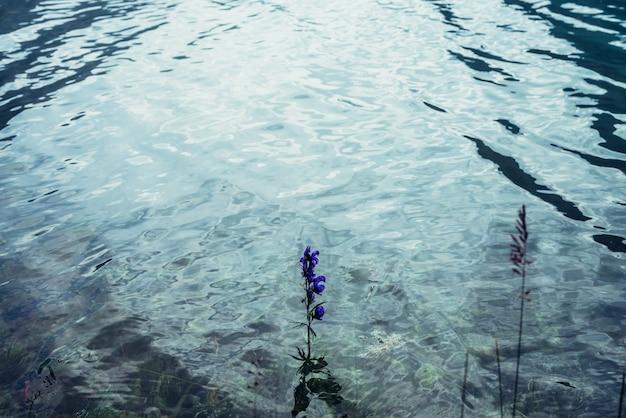 Pequena flor violeta na água do lago