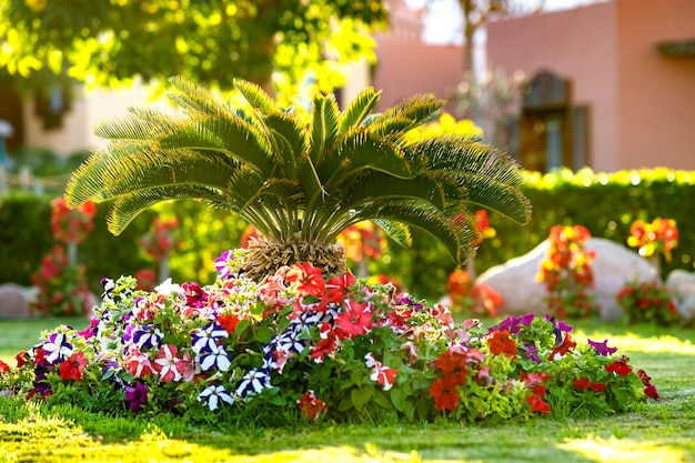 Pequena palmeira verde rodeada de flores brilhantes