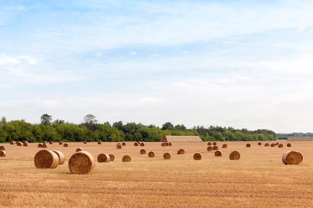 Pequena pilha cilíndrica de palha de trigo seca amarela no campo agrícola