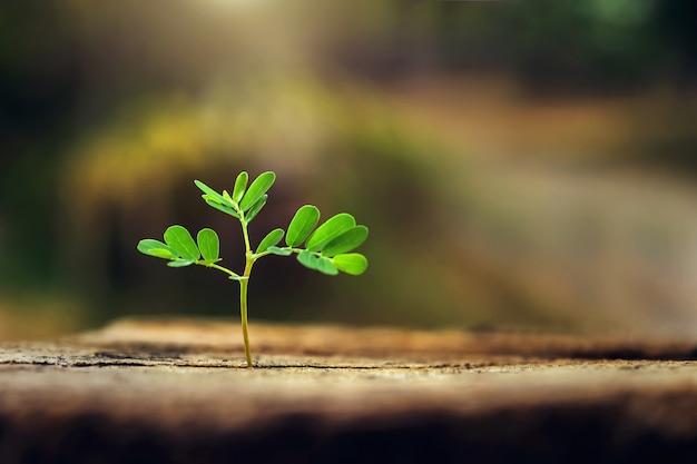 Pequena planta crescendo na luz da manhã