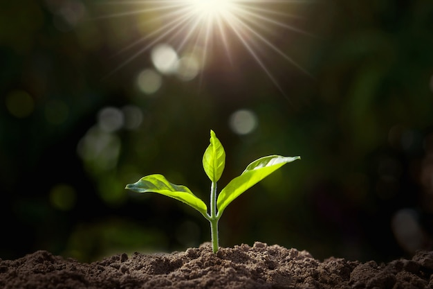 Pequena planta crescendo no jardim com luz solar