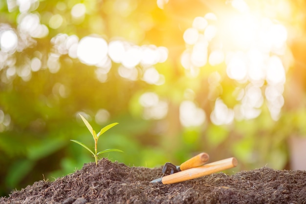 Pequena planta crescendo no jardim. novo começo do dia. salvar o meio ambiente e o novo conceito de vida de transformação