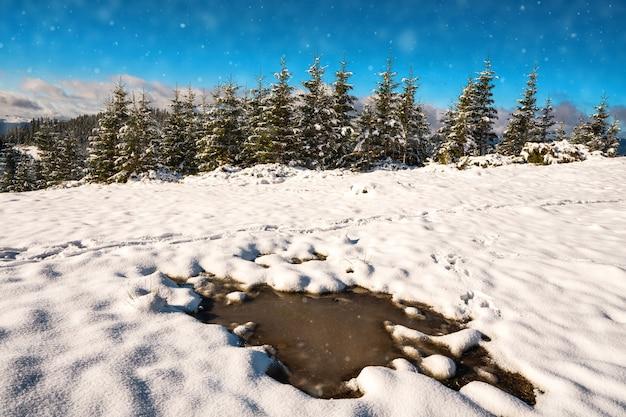 Pequena poça de neve derretida sob o sol da primavera nas montanhas dos cárpatos