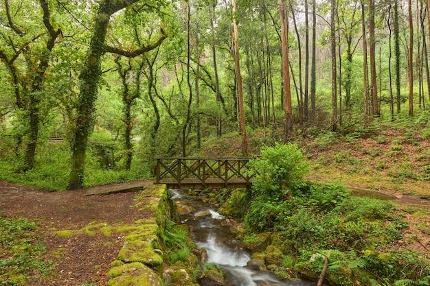 Pequena ponte de madeira sobre um rio em uma bela floresta na região da galiza, espanha.