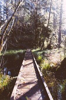 Pequena ponte estreita de madeira em uma floresta sobre um rio pequeno
