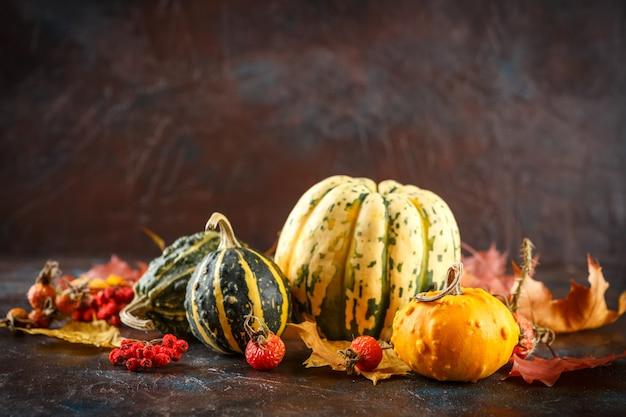 Pequenas abóboras decorativas e folhas de bordo de outono em marrom