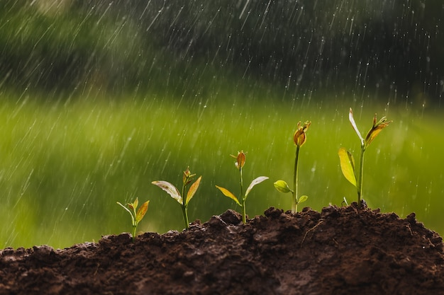 Pequenas árvores de diferentes tamanhos no fundo de respingos de água, o conceito de gestão ambiental e o dia mundial do meio ambiente com conceito de rsc