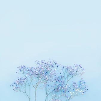 Pequenas flores azuis em bando