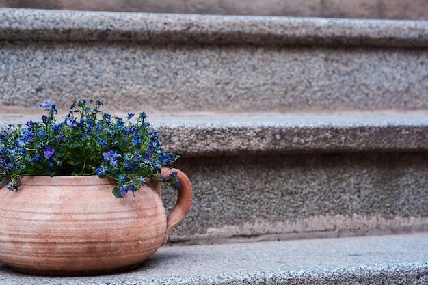 Pequenas flores azuis em panela de barro em uma escada velha