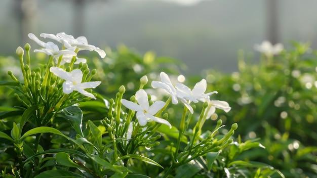 Pequenas flores brancas com folhas verdes