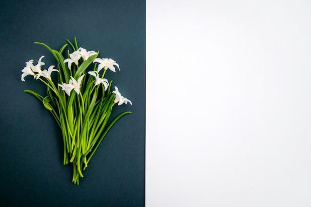 Pequenas flores brancas sobre fundo verde escuro