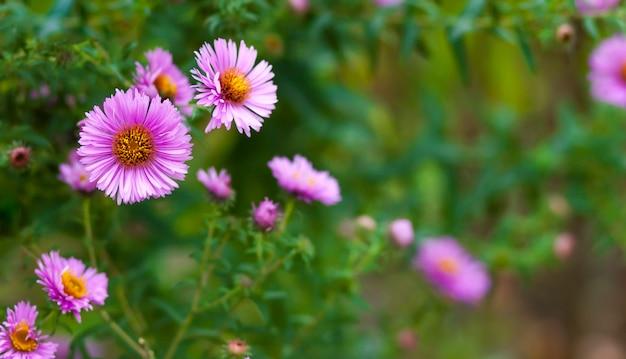 Pequenas flores cor de rosa em fundo verde escuro