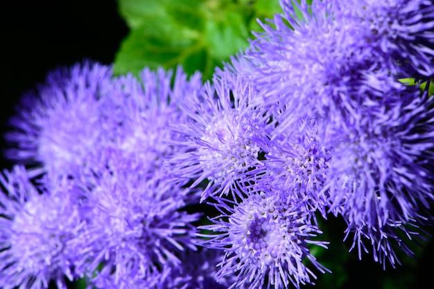Pequenas flores lilás em um jardim