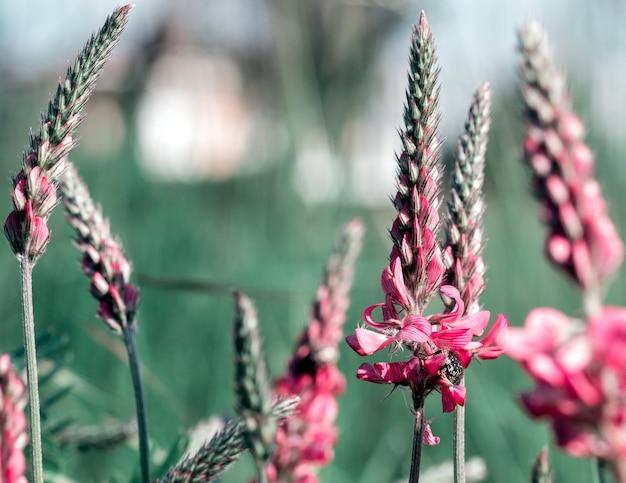 Pequenas flores roxas em um caminho rural