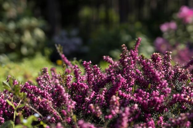 Pequenas flores roxas no jardim botânico