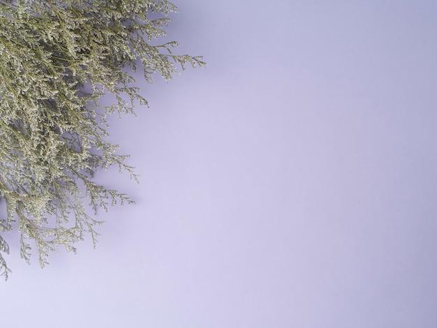 Pequenas flores secas de limonium roxo isoladas no fundo roxo