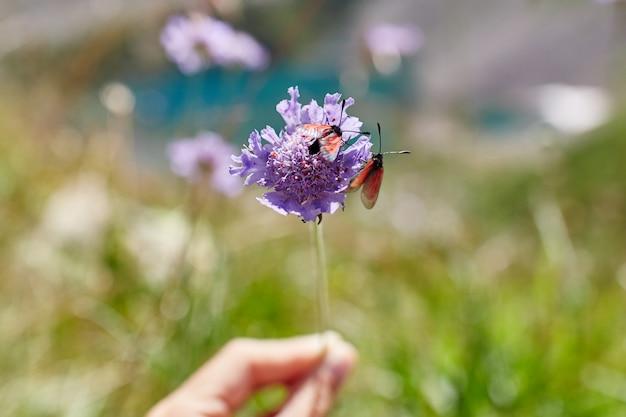 Pequenas flores silvestres lindas crescem entre pedras no sol da tarde