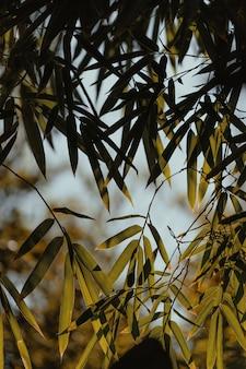 Pequenas folhas verdes em uma árvore