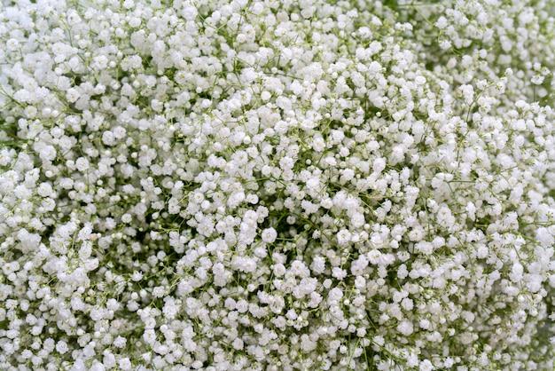 Pequenas lindas flores decorativas.