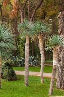 Pequenas palmeiras em um gramado verde iluminado pelo sol brilhante