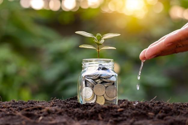 Pequenas plantas crescem em garrafas de moedas para economizar dinheiro no solo e refeições regadas para cuidar das finanças, ideias de negócios e crescimento do investimento.
