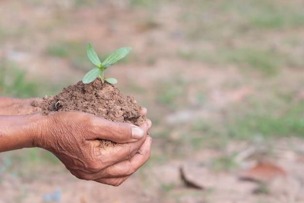 Pequenas plantas e solo em velhas mãos com bokeh e turva