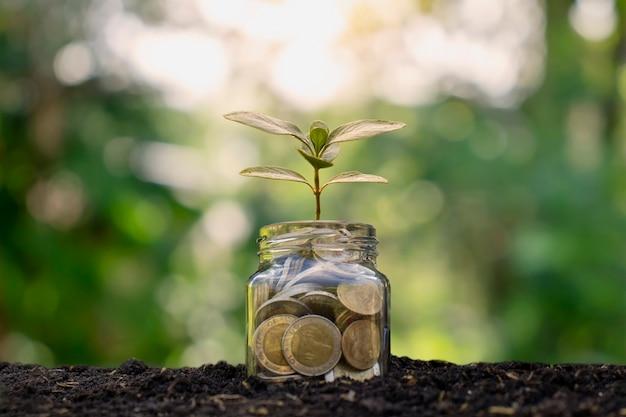 Pequenas plantas que geram dinheiro para garrafas, moedas no solo, ideias de crescimento de negócios e investimentos.