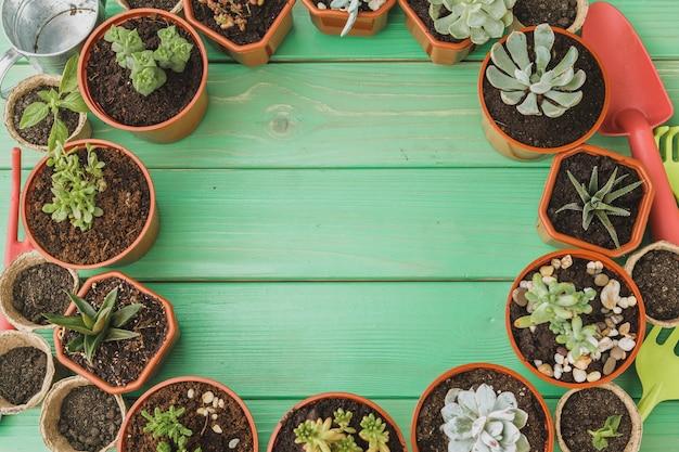 Pequenas plantas suculentas estão prontas para transplante close-up em fundo de madeira