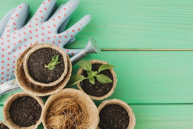 Pequenas plantas suculentas estão prontas para transplante close-up na superfície de madeira