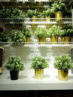 Pequenas plantas verdes em vasos de ouro nas prateleiras brancas