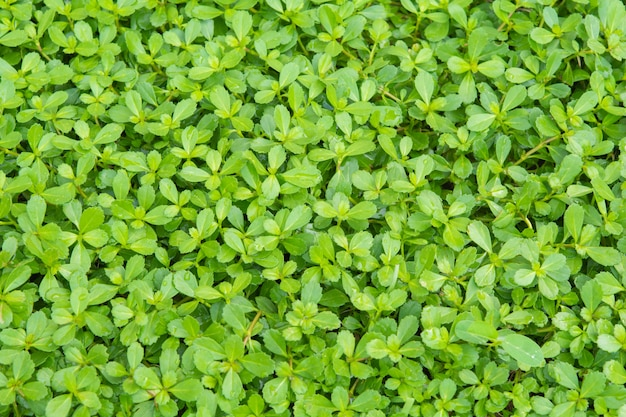 Pequenas plantas verdes. no chão e fundo