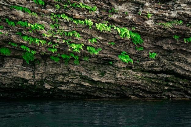 Pequenas samambaias verdes crescem de cabeça para baixo na abóbada da caverna acima da água