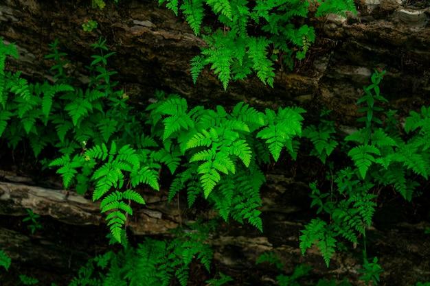 Pequenas samambaias verdes crescem de cabeça para baixo na abóbada da caverna