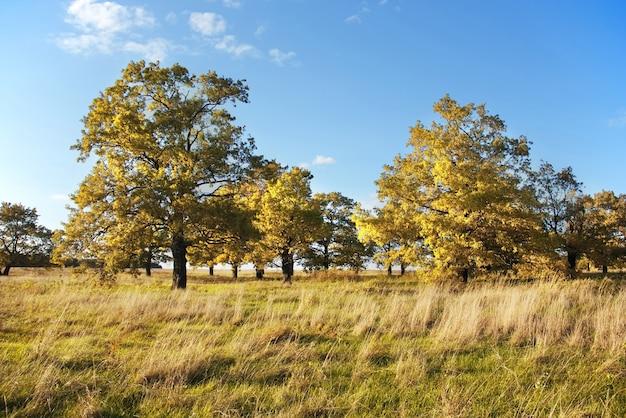 Pequeno bosque de carvalhos em um campo contra um céu azul claro