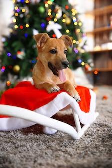 Pequeno cachorro engraçado e fofo deitado no trenó branco na superfície da árvore de natal