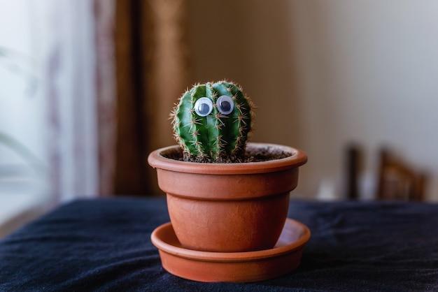 Pequeno cacto bonito com olhos em uma panela de cerâmica na sala.