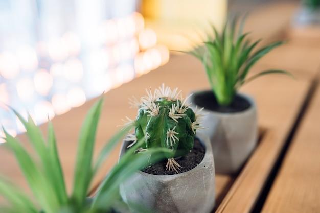 Pequeno cacto e babosa em pequenos vasos