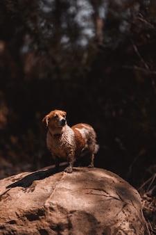 Pequeno cão branco e molhado em uma rocha