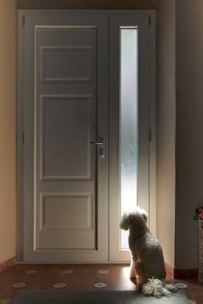 Pequeno cão branco sentado à espera de uma porta