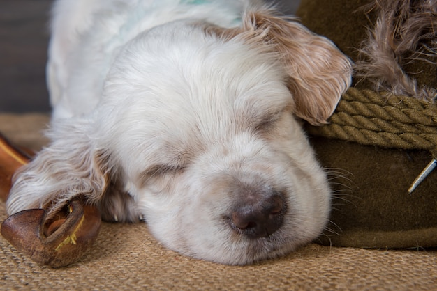 Pequeno cão de caça setter inglês ao lado de uma faca de caça e um chapéu com penas de pato