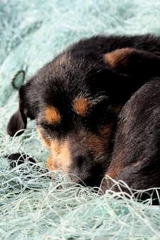Pequeno cão preto e marrom, dormindo em cima de uma rede de pesca.