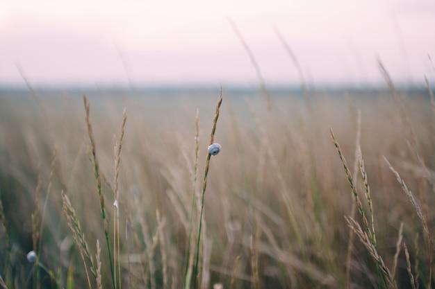 Pequeno caracol na grama, luz do sol